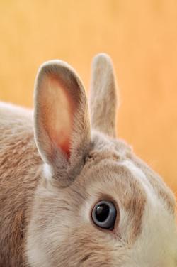 Emiliano-vittoriosi-703070-rabbitears_sm